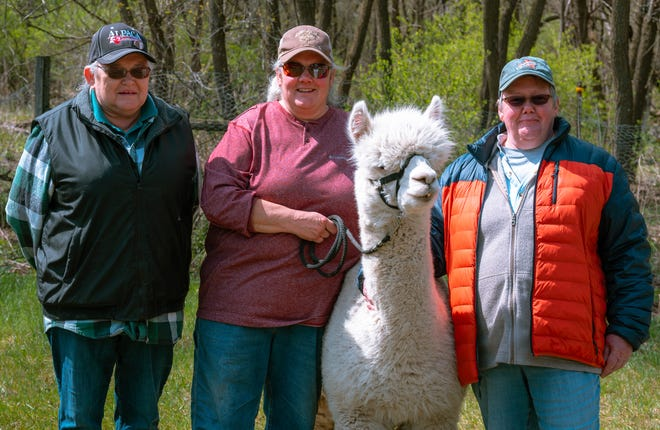From left, Sue Schmidt, Jeanne Frost and Donna Grunow pose with Noah the alpaca. The sisters keep busy making crafts for the alpaca farm's store.