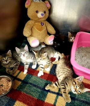 Six kittens and an adult female and male cat were found in a crate outside First Presbyterian Church in Port Huron Monday and taken to St. Clair County Animal Control.