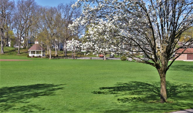 Spring in Edmund Lyon Park.