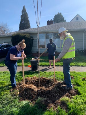 Volunteers with Friends of Trees plant trees on March 27. Friends of Trees was awarded an EWEB Greenpower grant in 2018, which it used to plant trees in west Eugene.