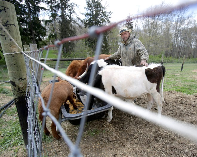 Timothy Ward stands with his cattle and goats. Canton Township is suing him for keeping farm animals in a residential neighborhood, contending he is violating local zoning regulations.