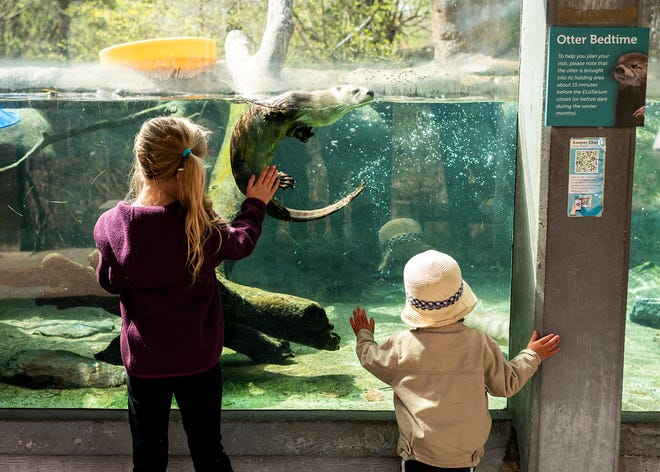 Audrina, 8, and Cullen Pellegrini, 2, greets the otters on  April 23, the first day EcoTarium reopened to the public after a months-long hiatus due to COVID-19.