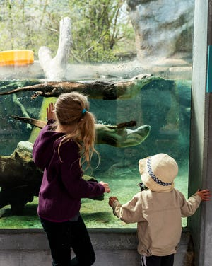 Audrina, 8, and Cullen Pellegrini, 2, greet the otters on Friday, the first day EcoTarium reopened to the public after a months-long hiatus due to COVID-19.