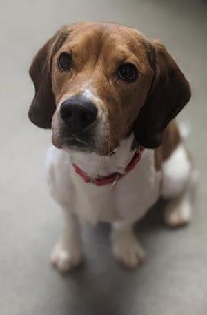 Montana is available through WARL's adoption program.