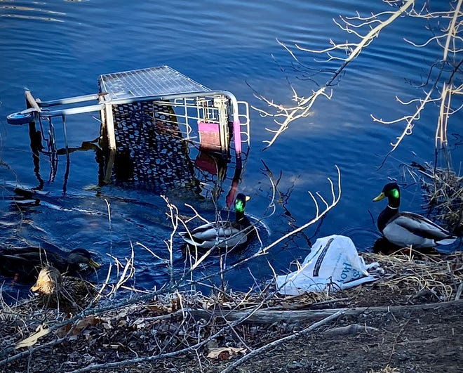 A pair of mallards and a Stop & Shop shopping cart are seen here in the water next to the city's Quequechan River Rail Trail.