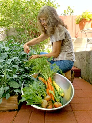 Joanne Corwin of Albuquerque, N.M. picks vegetables from her backyard garden. Corwin participated in the Seed to Supper course last year. The course is offered by New Mexico State University's Cooperative Extension Service and the Ideas for Cooking and Nutrition program.