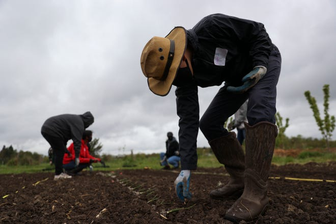 Oscar Amaro plants an onion at Marion Polk Food Share Youth Farm in Salem, Oregon on Saturday, April 24, 2021.