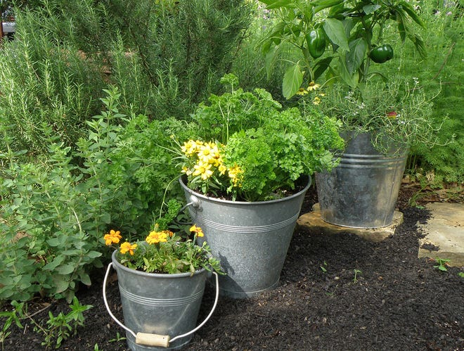 An herb garden can be grown in a variety of pots and planters.