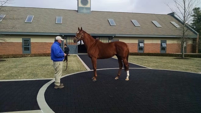 The horse Animal Kingdom is photographed from when he stood stud at Darley America Jonabell Farm in Lexington.