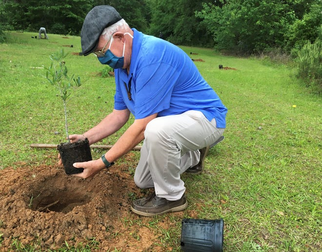 Claude Kenneson of Big Bend Catholics Caring for Creation prepares to plant a sapling at Governor's Park on Saturday, April 24.
