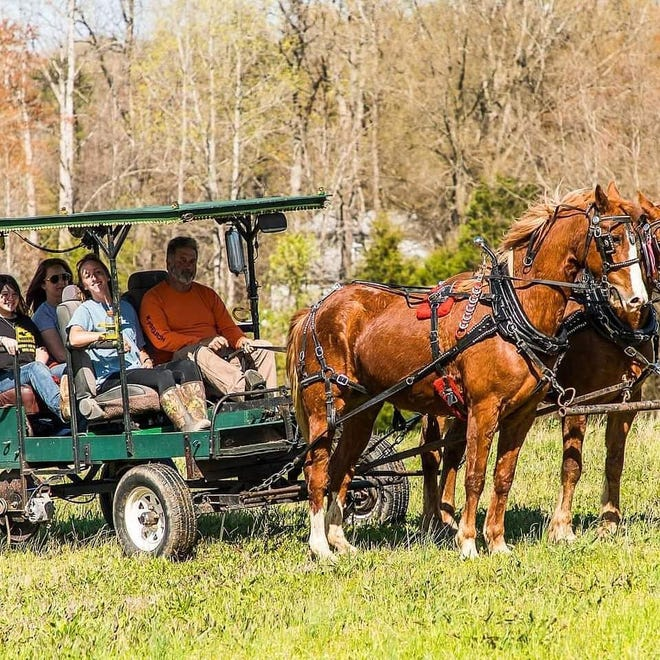 Greg Carpenter (front right) gives a tour of his Red Hound Farms in one of the small carriages using Haflinger horses.