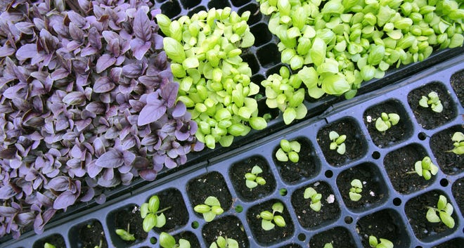 Choose from hundreds of varieties of organically grown annuals and perennials at SCLT's annual Plant Sale.