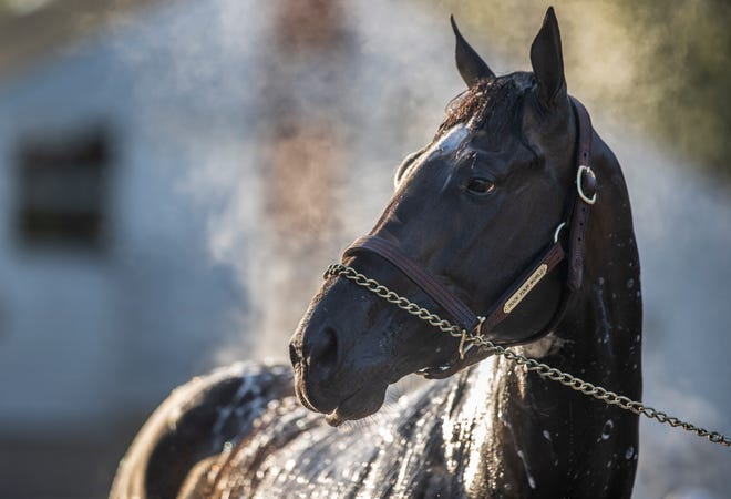 Rock Your World gets a morning bath on April 26, 2021.