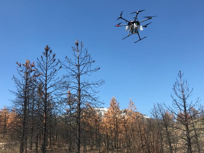 A specalized drone reseeds a portion of the forest burned in the 2020 Loyalton Fire north of Reno.