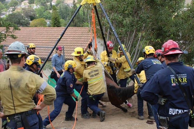 Ventura County firefighters rescued a horse after it fell down a hillside on Sunday morning in Thousand Oaks.