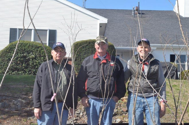 Hampton Falls Town Improvement Committee members Andy Brubaker, Dick Robinson and Larry Smith recently distributed disease-resistant trees to residents as part of the town's elm tree restoration project.