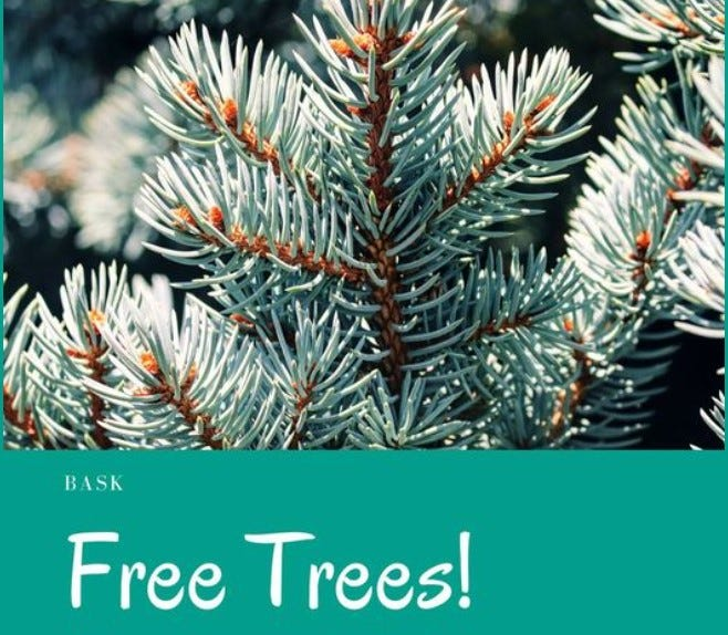 Bask in Fairhaven is giving away 1,000 free trees on May 1 for Arbor Day.