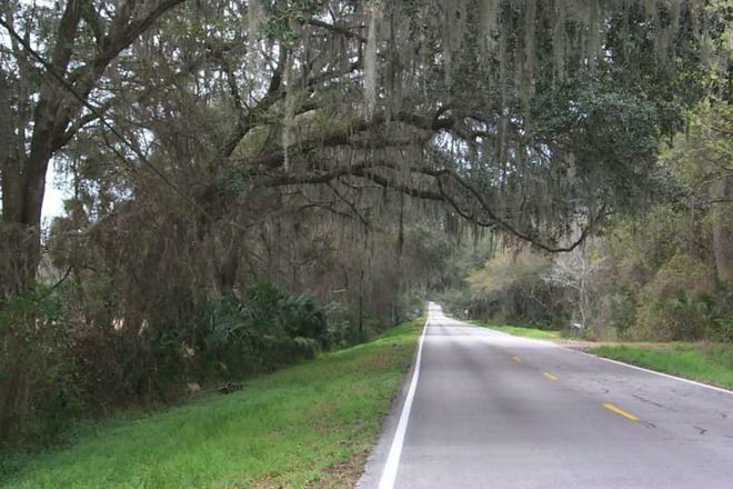 Tuscawilla Road in Micanopy. County commissioners voted to designate it as a scenic road, allowing it additional protections and regulations. [Alachua County government]