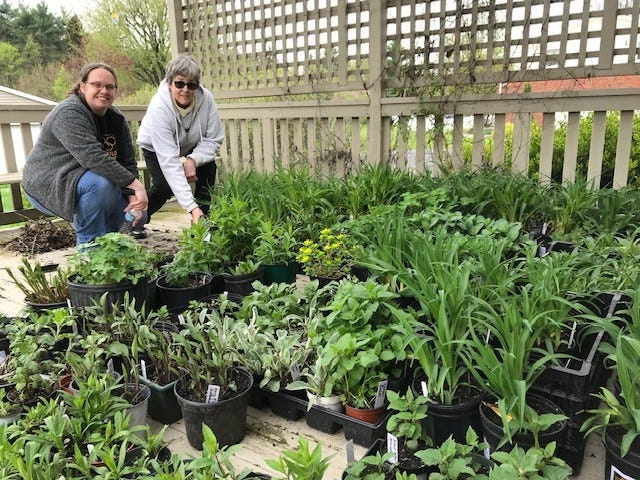 Earth, Wind and Flowers Garden Club members Julie Rexroad and Joy Lauthers survey dozens of potted perennials ready to take to the Crawford County Fairgrounds for the club's May 8 plant sale.