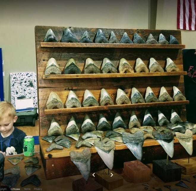 These fossilized teeth of the prehistoric shark Megalodon were collected by Barry Segura of St. George, S.C. George will be one of the vendors at the fifth annual Spring Athens Rock, Gem, Mineral, Fossil and Jewelry Show this weekend.