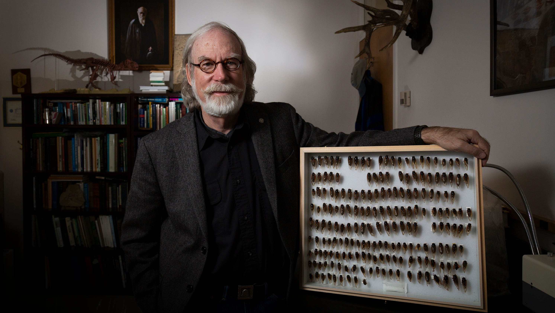 Brood X: The Indiana Jones of cicadas prepares for their arrival