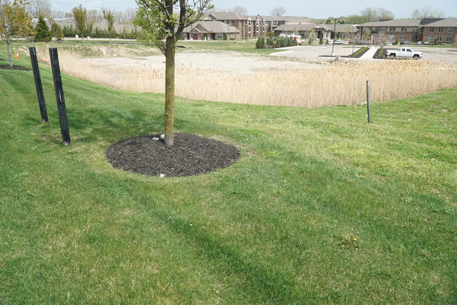 The lot along Haggerty just north of Cantoro's in Northville Township.