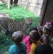 Children gather around to look at animal at the Greenville Zoo.
