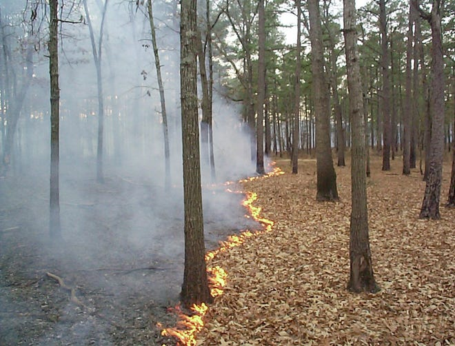 A file photo shows a prescribed burn in January 2000 at Fort Gordon.