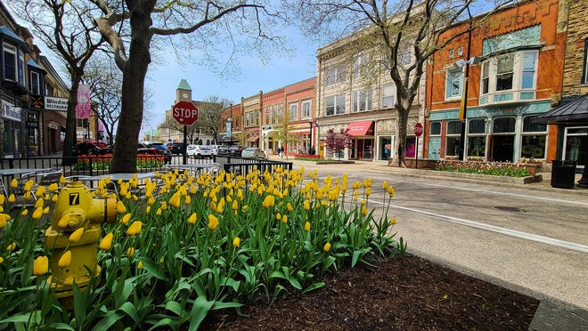 Tulips bloom in downtown Holland on Wednesday, April 28. Structures and statues along Eighth Street are included in the Tulip Time 2021 Scavenger Hunt.