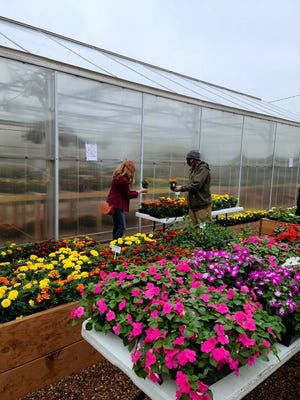 A student volunteer helps a customer at the recent Harding Charter Preparatory High School plant sale.