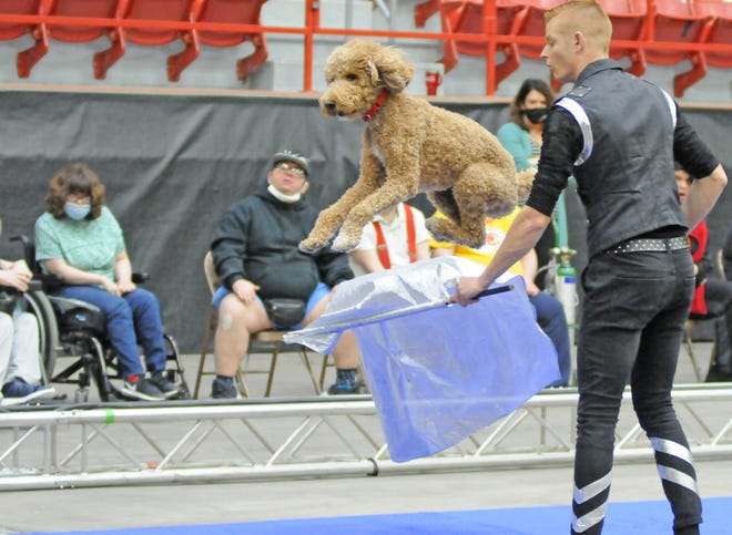 """Tarzan Zerbini Circus performer Wesley Williams has his rescue dog Rudy jump over the flag during a special performance at the Tony's Pizza Events Center on Thursday morning. Williams has been doing several television and vitural shows during the coronavirus pandemic. """"This is the first live show back since COVID-19 for most of us, we are really excited to perform in front of a live audience again,"""" said Williams."""