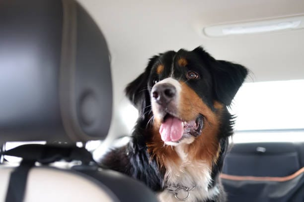 There's a safety protocol for dogs riding in your car that could save Max's life in a worse-case scenario.