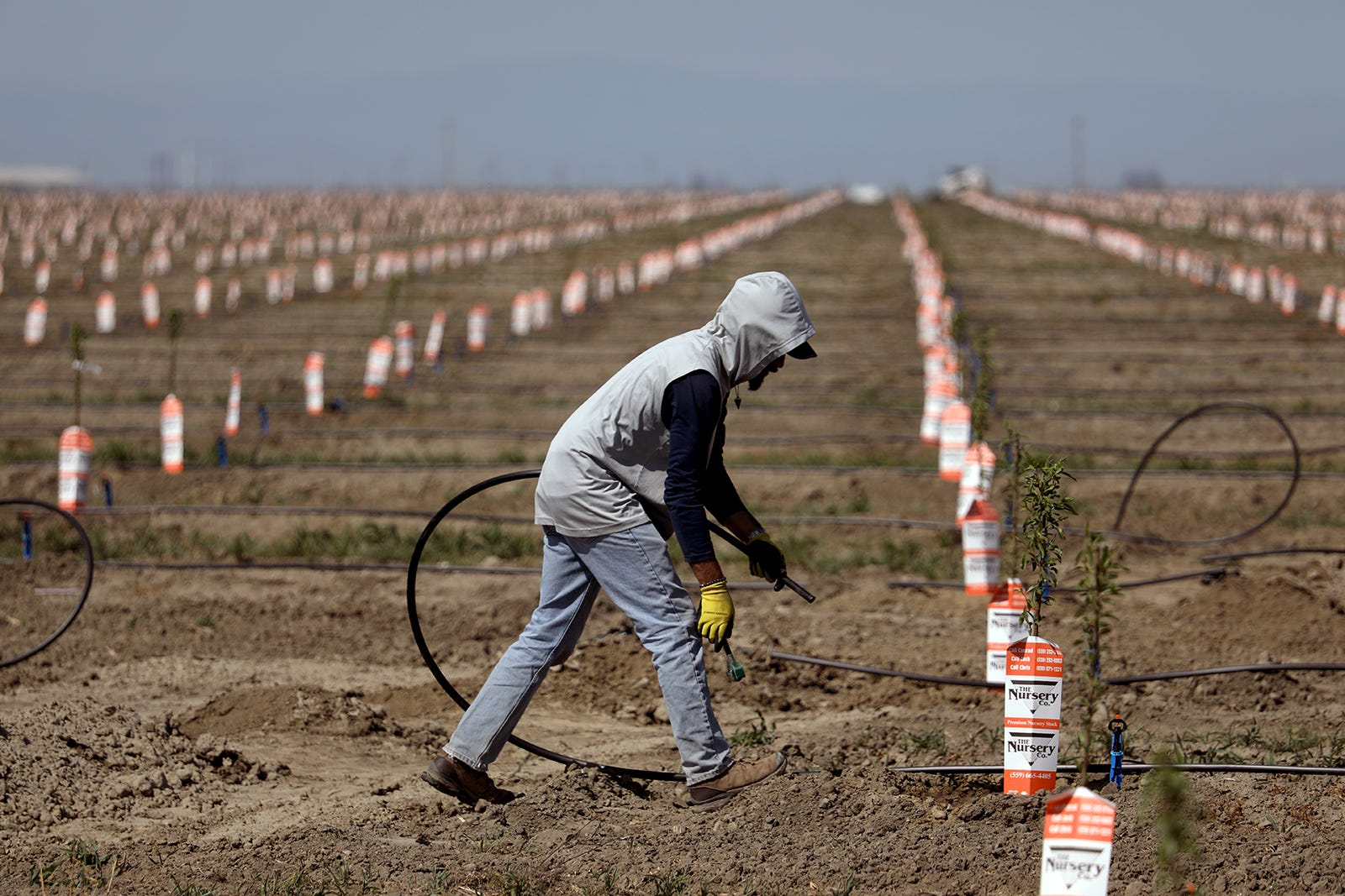 Wells dry up, crops imperiled, farmworkers in limbo as California drought grips San Joaquin Valley 1
