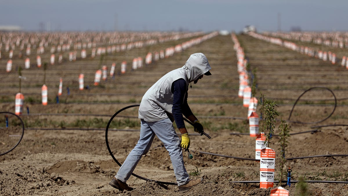 Wells dry up, crops imperiled, farmworkers in limbo as California drought grips San Joaquin Valley 2