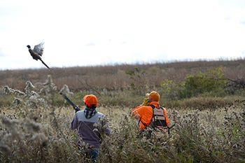 The Michigan DNR is introducing a new pheasant hunting license to help fund pheasant release programs.