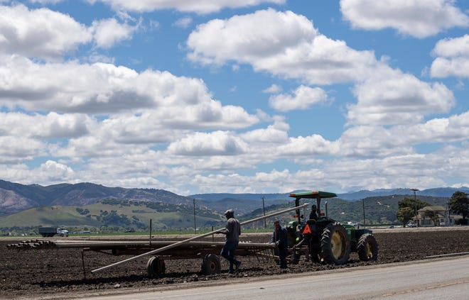 Farmworkers pick up irrigation sprinklers early morning in Salinas Calif., on Monday, April 26, 2021.