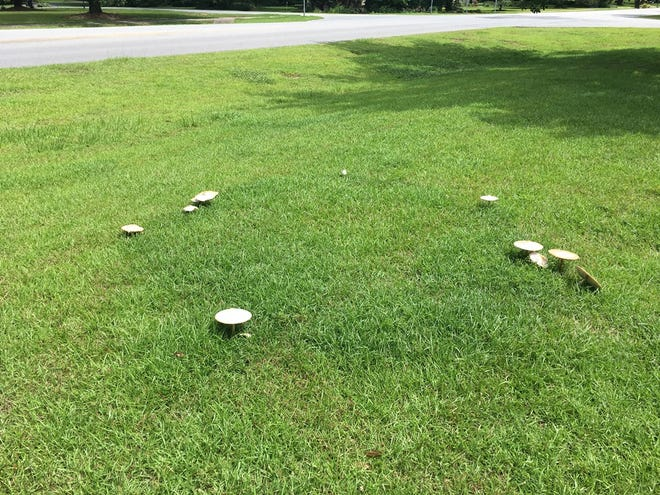 While it may seem the mushrooms appear suddenly and without logical reason, the source of their nutrition and basis for swift growth lays silently underneath the grass.