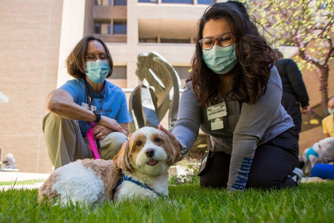 Charley, a 3-year-old Havanese owned by pet therapy volunteer Judy Knoll, receives pets from Tammy Sanchez, a registered nurse in Stormont Vail Health's endoscopy department, at the Picnic with Pups event Friday morning in the hospital courtyard.