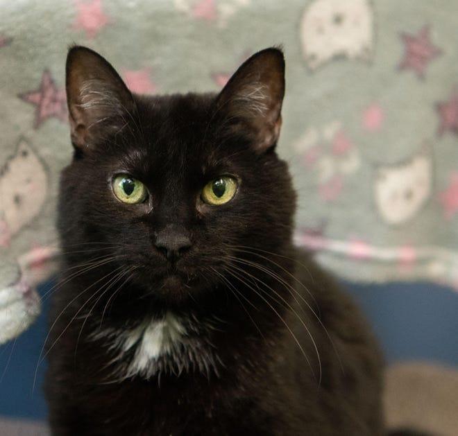 Bernice is available through WARL's animal adoption program.
