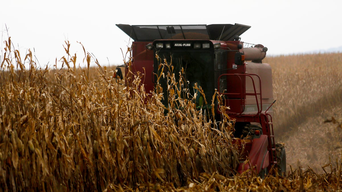 White farmers sue seeking government loan forgiveness 2