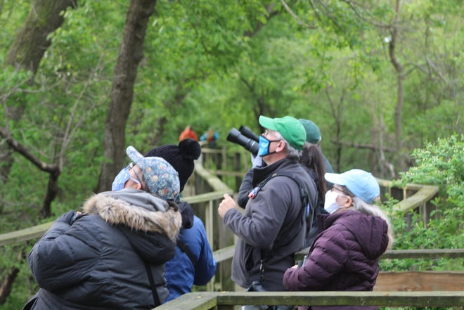 Visitors were allowed, with permits, to walk on Magee Marsh Wildlife Area's boardwalk amid the Biggest Week in American Birding. Up to 200 people per hour will be allowed on the boardwalk Friday through Monday until the end of May for peak bird migration season.