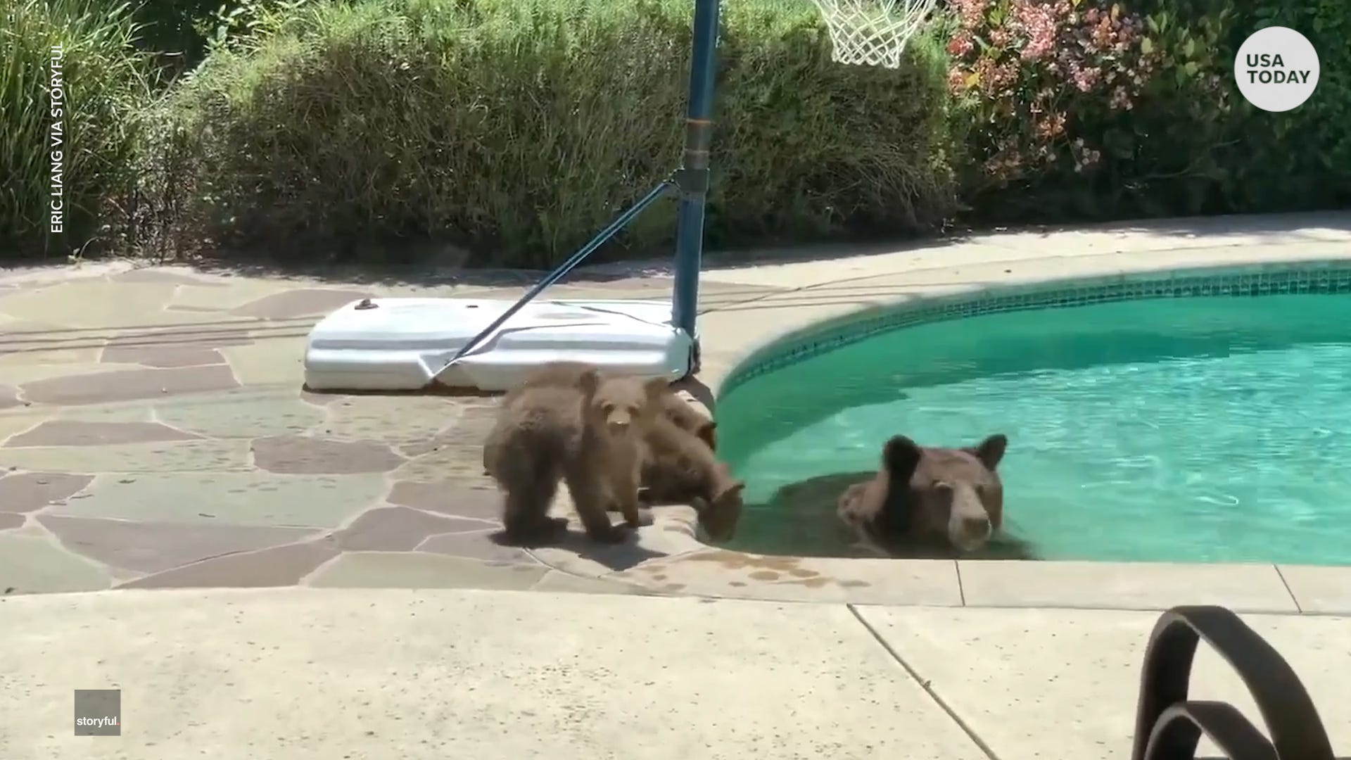 Mama bear enjoys 'me time' in family's swimming pool while cubs look on