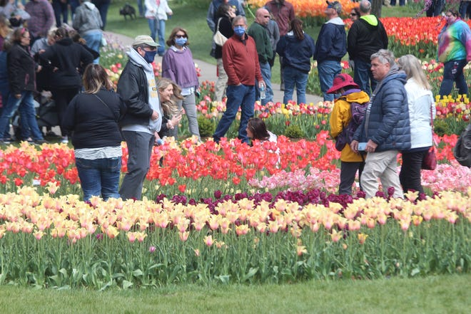 People gather with and without masks to gaze at tulips on Saturday, May 1, at Window on the Waterfront.