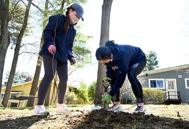 Cindy Zhao, 17, and Ava Towle, 16, plant an Eastern redbud tree in the backyard of a Debra Lane home in Framingham while participating in the Framingham High School Environmental Awareness Club's tree planting program, Saturday May 1, 2021. More than 200 Eastern redbud and red maple saplings were planted by high school students in partnership with the nonprofit Tree-Plenish.