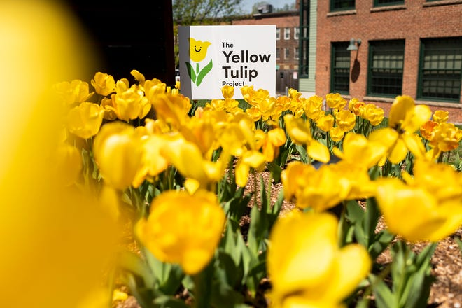 The Yellow Tulip Project is a youth-driven, nonprofit organization that aims to reduce mental health stigma.