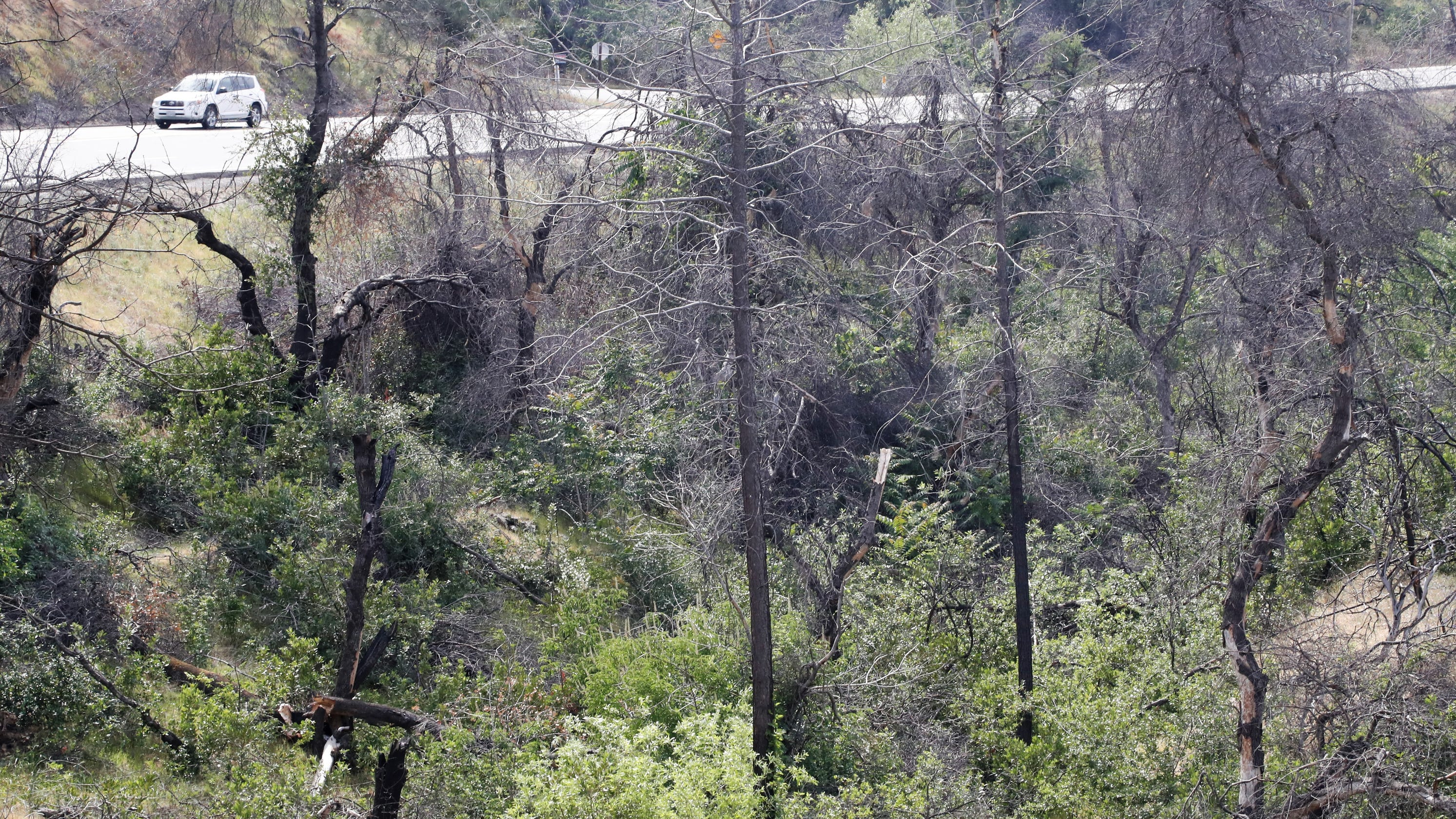 'Nothing. Zero.' How fire safety work west of Redding got delayed two years by California, FEMA