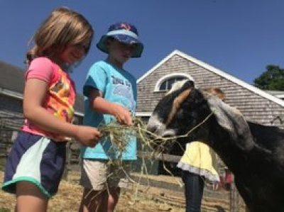 Befriend the Barnyard at Appleton Farms