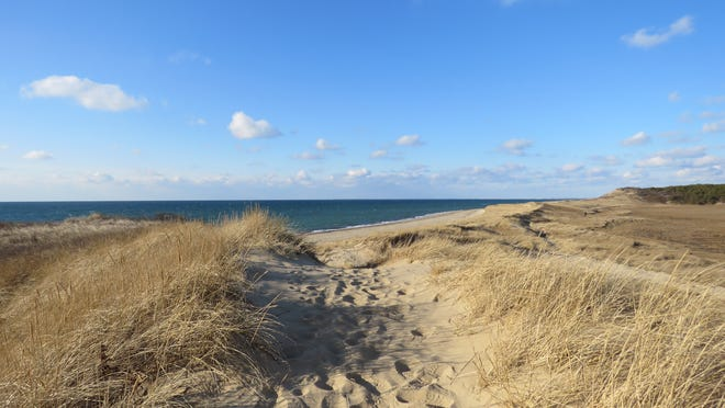 Along the Cape Cod National Seashore's Great Island Trail in Wellfleet.