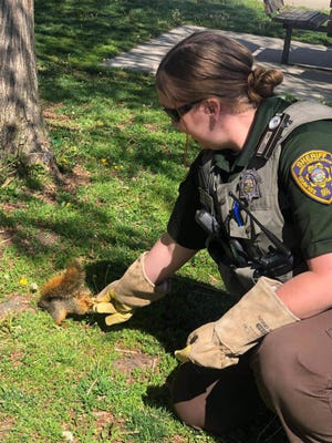 The Shawnee County Sheriff's Office on Friday relocated this overly friendly squirrel it said had been scaring people at the Gage Park Carousel.