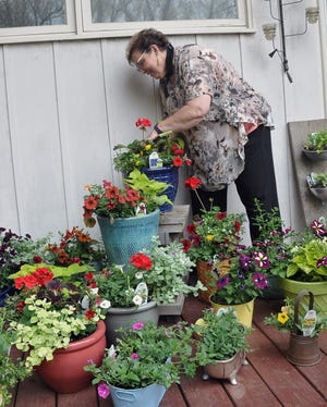 Vicky Puster puts the finishing touches on several potted plants she has ready for the Moreland Garden Club plant sale.